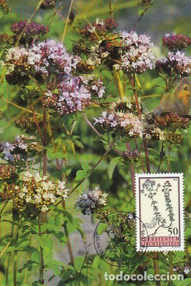 LIECHTENSTEIN IVERT 1010, FLORES DEL JARDIN BOTANICO: OREGANO, TARJETA MAXIMA DE 6-9-1993 (Sellos - Temáticas - Flora)