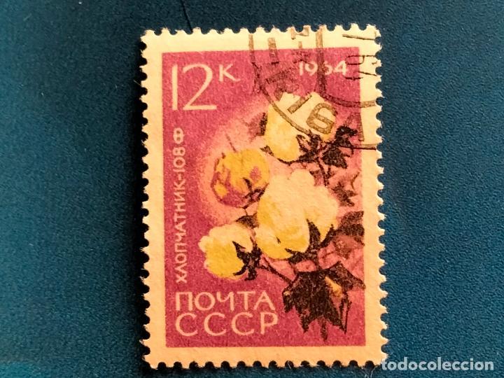 RUSIA. CCCP. AÑO 1964. YVERT 2841. FLORA. FLORES (Sellos - Temáticas - Flora)