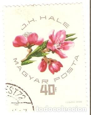 SELLO USADO HUNGRIA. YVERT Nº 1662. EXPOSICIÓN NACIONAL DE MELOCOTONES Y ALBARICOQUES. 2HUN-1662U (Sellos - Extranjero - Europa - Hungría)