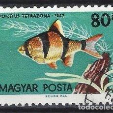 Timbres: HUNGRÍA 1962 - PECES TROPICALES, BARBO DE SUMATRA - USADO. Lote 230008105
