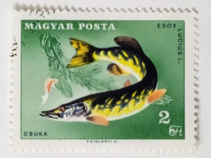 SELLO DE HUNGRIA 2 FT - 1967 - CONGRESO PESCADORES - USADO SIN SEÑAL DE FIJASELLOS (Sellos - Extranjero - Europa - Hungría)