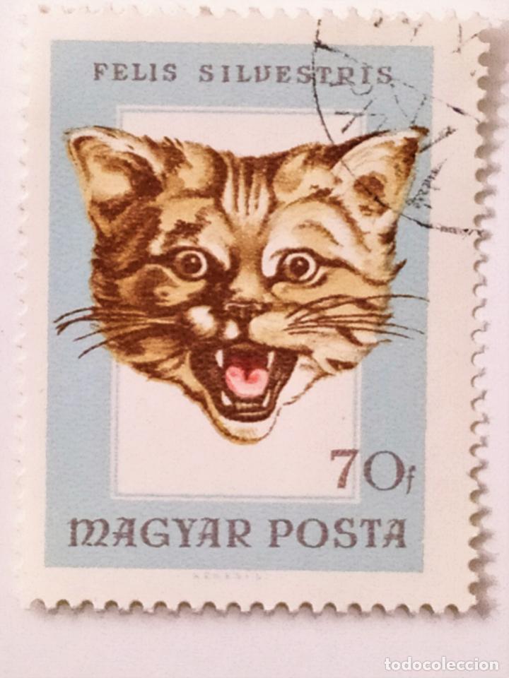 SELLO DE HUNGRIA 1 FT - 1966 - GATO - USADO SIN SEÑAL DE FIJASELLOS (Sellos - Extranjero - Europa - Hungría)