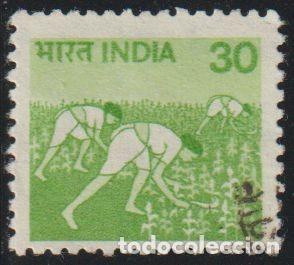 INDIA 1982 SCOTT 843A SELLO º MUJERES RECOLECTANDO ARROZ MICHEL 794CY YVERT 718 STAMPS TIMBRE INDE (Sellos - Extranjero - Asia - India)