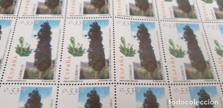 PLIEGO COMPLETO - FACIAL 26,5 € (50 X 0,53€ ) - ÁRBOLES MONUMENTALES - BIERZO - EDIFIL 4221 (Sellos - España - Juan Carlos I - Desde 2.000 - Nuevos)