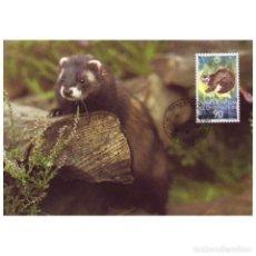 Sellos: [C0284] LIECHTENSTEIN 1989. MAXICARD WWF. PROTECCIÓN NATURALEZA, 90 RP (M). Lote 264741669
