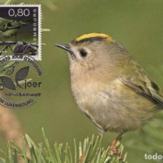 Sellos: LUXEMBOURG 2020 - 100 YEARS OF NATUR & EMWELT MAXIMUM CARD. Lote 205008045