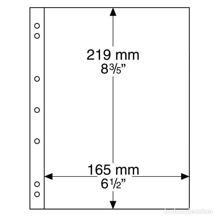 Leuchtturm 304653 Hojas para Monedas NUMIS de 1 divisi/ón para Series de Monedas
