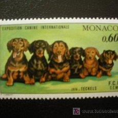 Sellos: MONACO 1976 IVERT 1051 *** EXPOSICIÓN CANINA INTERNACIONAL MONTECARLO - PERROS - FAUNA - TECKELS. Lote 19910108