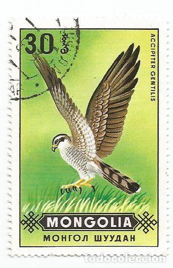 SELLO USADO DE MONGOLIA DE 1970- AVES DE PRESA AZOR- YVERT 534- VALOR 30 MONGO (Sellos - Extranjero - Asia - Mongolia)