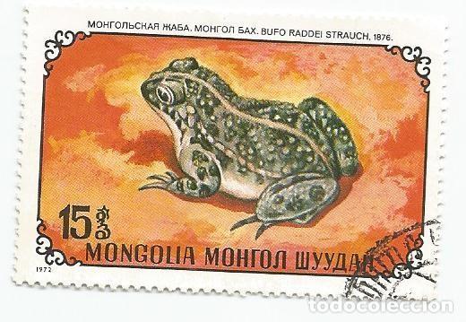 SELLO USADO DE MONGOLIA DE 1972- ANFIBIOS SAPO MONGOL- YVERT 631- VALOR 15 MONGO (Sellos - Extranjero - Asia - Mongolia)