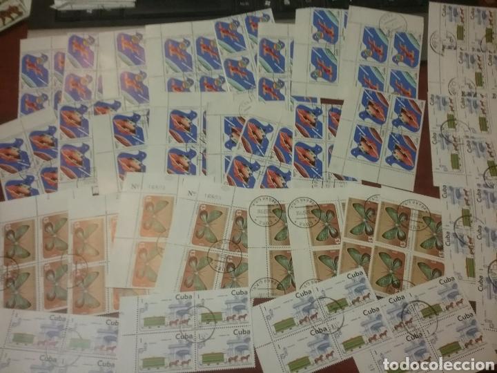 Sellos: Sellos R. Cuba mtdos/bloques 2x2/1970-1980/stock/coleccion/al por mayor/flora/fauna/animales/ - Foto 5 - 197579363