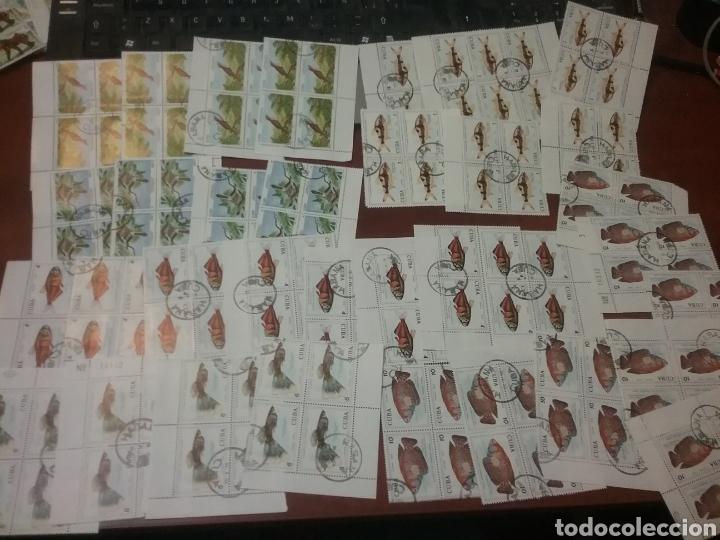 Sellos: Sellos R. Cuba mtdos/bloques 2x2/1970-1980/stock/coleccion/al por mayor/flora/fauna/animales/ - Foto 7 - 197579363