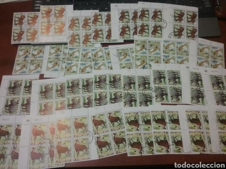 Sellos: Sellos R. Cuba mtdos/bloques 2x2/1970-1980/stock/coleccion/al por mayor/flora/fauna/animales/ - Foto 10 - 197579363
