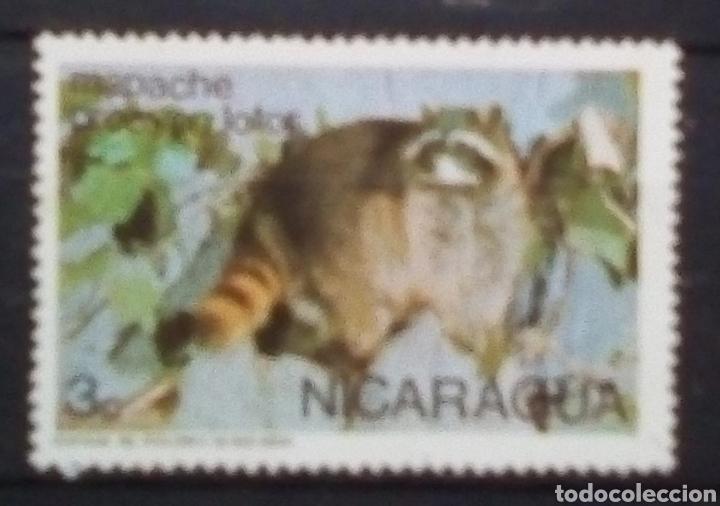 NICARAGUA MAPACHE SELLO NUEVO (Sellos - Extranjero - América - Nicaragua)