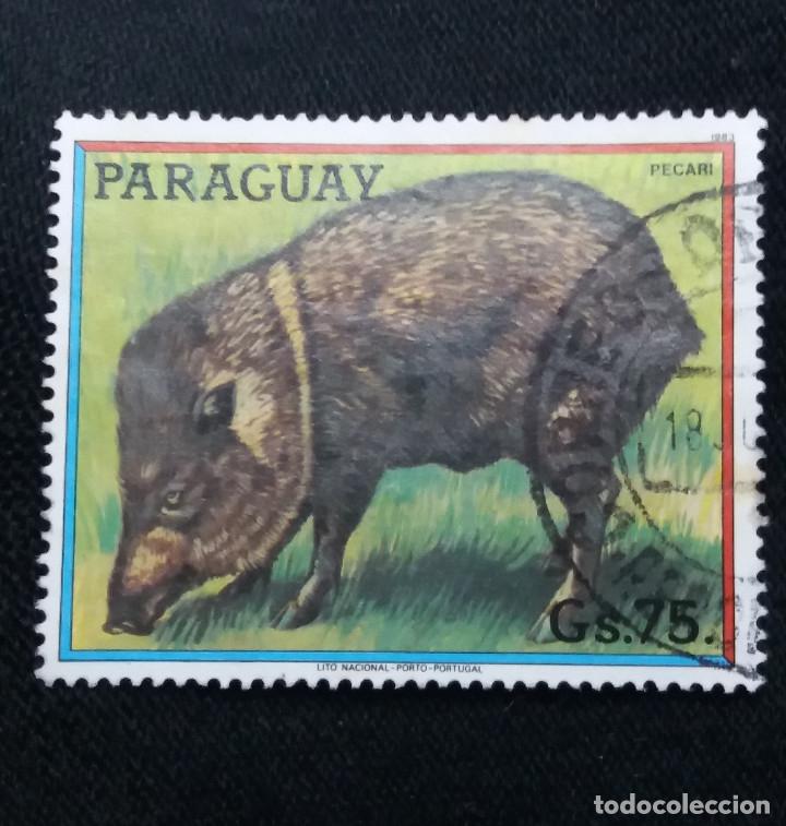 PARAGUAY, 75 GUARANIES, PECARI, AÑO 1980. (Sellos - Extranjero - América - Paraguay)