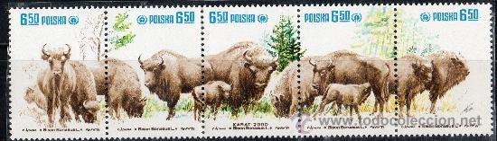 POLONIA AÑO 1981 YV 2580/84* PROTECCIÓN DE LA NATURALEZA - FAUNA - BISONTES - MAMÍFEROS (Sellos - Extranjero - Europa - Polonia)