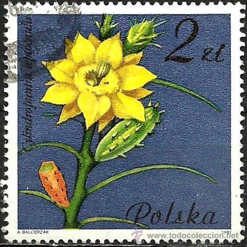 POLONIA 1981- YV 2601 (Sellos - Extranjero - Europa - Polonia)