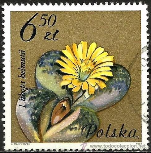 POLONIA 1981- YV 2605 (Sellos - Extranjero - Europa - Polonia)