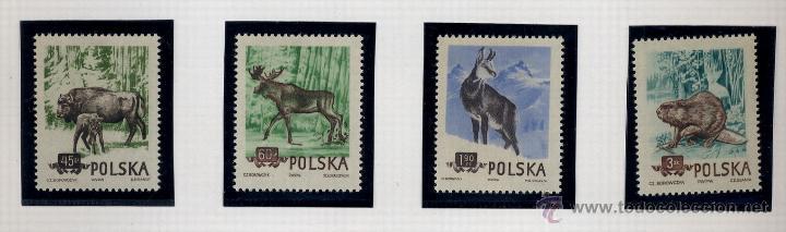 Sellos: POLONIA - LOTE DE 120 SELLOS DISTINTOS ENTRE 1939 Y 1959 - USADOS Y NUEVOS - VER FOTOS DE TODOS - - Foto 42 - 52734381