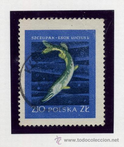 Sellos: POLONIA - LOTE DE 120 SELLOS DISTINTOS ENTRE 1939 Y 1959 - USADOS Y NUEVOS - VER FOTOS DE TODOS - - Foto 62 - 52734381