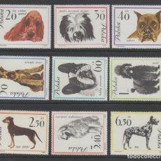 Sellos: POLONIA 1963 IVERT 1232/40 *** FAUNA - PERROS DE RAZA. Lote 190351582