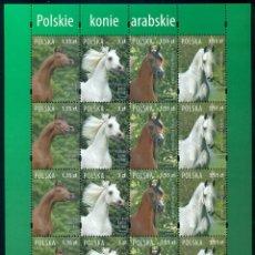 Sellos: PL-4329 POLAND 2007 MLH POLISH ARABIAN HORSES HORSES. Lote 221674623