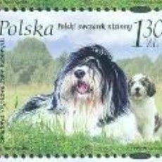 Sellos: PL-4282 POLAND 2006 MNH WORLD DOG SHOW - POZNAN POLAND DOGS. Lote 221674628