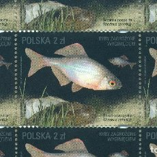 Sellos: 4869 POLAND 2016 MNH ENDANGERED FISH SPECIES - SHEETS FISH. Lote 221674710