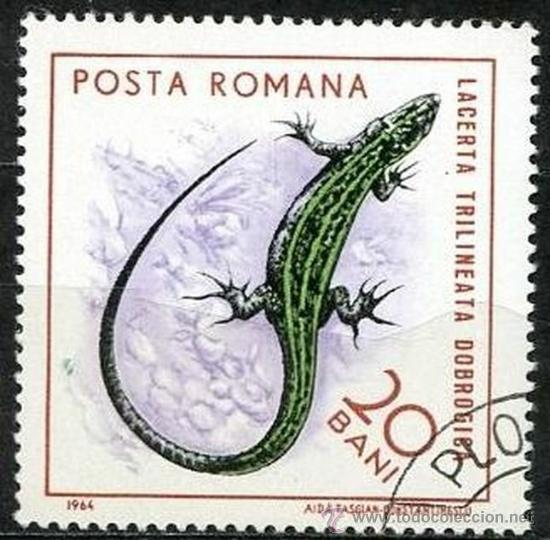 RUMANIA 1964 SCOTT 1721 SELLO º FAUNE REPTILES LAGARTO LACERTA TRIILINEATA DOBROGISA 20BANI ROUMANIE (Sellos - Extranjero - Europa - Rumanía)