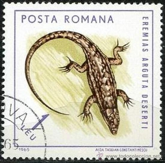 RUMANIA 1964 SCOTT 1725 SELLO º FAUNE REPTILES LAGARTO EREMIAS ARGUTA DESERTI 1LEU ROUMANIE ROMINA (Sellos - Extranjero - Europa - Rumanía)