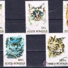Sellos: RUMANIA - LOTE DE 5 SELLOS - GATOS (USADO) LOTE 31. Lote 126525983