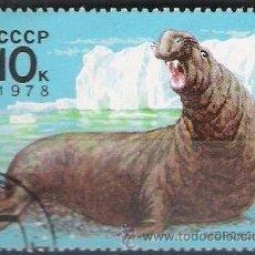 Sellos: RUSIA URSS 1978 SCOTT 4683 SELLO * FAUNA ELEFANTE MARINO 10K PREOBLITERÉ MATASELLO DE FAVOR . Lote 29398166