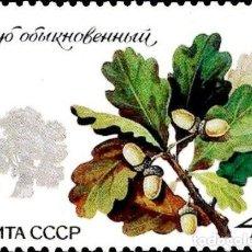 Timbres: RUSIA URSS 1980 SCOTT 4872 SELLO ** FLORA ARBOLES PEDUNCULATE OAK (QUERCUS ROBUR) MICHEL 5003 Y 4743. Lote 240623350