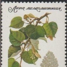 Timbres: RUSIA URSS 1980 SCOTT 4873 SELLO ** FLORA ARBOLES LIMA MICHEL 5004 YVERT 4744 RUSSIA STAMPS TIMBRE. Lote 240623480
