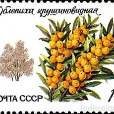 Timbres: RUSIA URSS 1980 SCOTT 4874 SELLO ** FLORA ARBOLES ESPINO AMARILLO SEA BUCKTHORN MICHEL 5004 YV. 4745. Lote 240623760