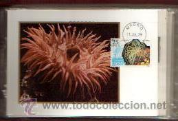 Sellos: TARJETAS FAUNA --INVERTEBRADOS COMPLETA 5 VALORES AÑO 1979 PRIMER DIA MADRID VER FOTOS - Foto 2 - 50437727