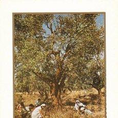 Sellos: EDIFIL 2557, RECOGIDA DE LA ACEITUNA, TARJETA MAXIMA DE PRIMER DIA DE 4-12-1979. Lote 97597499