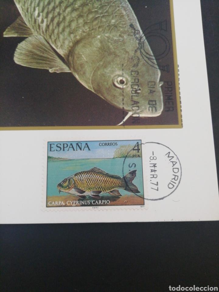 Sellos: Tarjeta con sello, Carpa. Primer día de circulación. Año 1977. - Foto 2 - 166631369