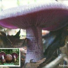 Sellos: TARJETA MAXIMA DE LA SETA LEPISTA NUDA EDIFIL 4437-FLORA-MICOLOGIA-. Lote 183770841
