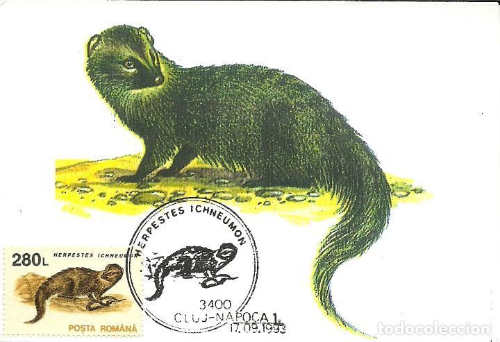 10 TARJETAS MAXIMAS DE RUMANIA CON DIFERENTES ANIMALES .FAUNA- (Sellos - España - Tarjetas Máximas )