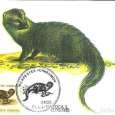 Sellos: 10 TARJETAS MAXIMAS DE RUMANIA CON DIFERENTES ANIMALES .FAUNA-. Lote 219765872