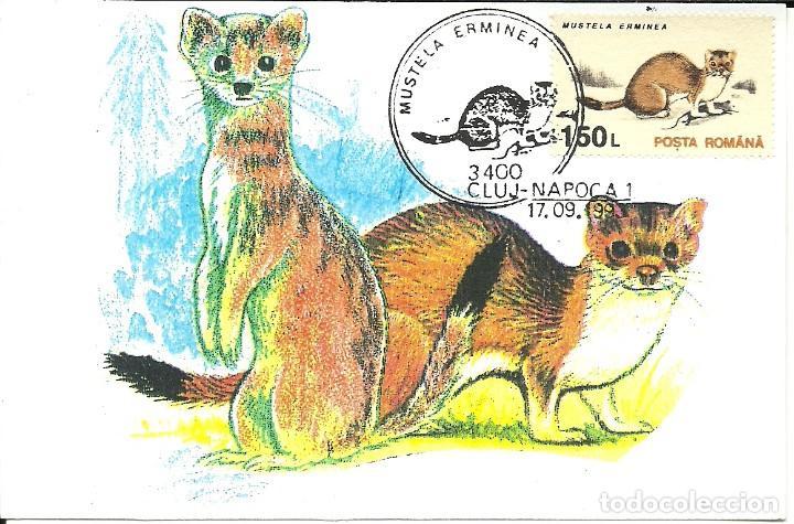 Sellos: 10 Tarjetas maximas de Rumania con diferentes animales .fauna- - Foto 3 - 219765872