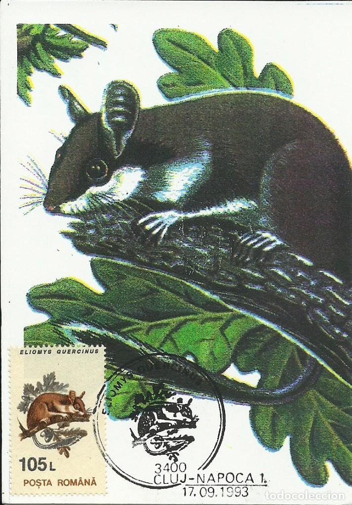 Sellos: 10 Tarjetas maximas de Rumania con diferentes animales .fauna- - Foto 5 - 219765872