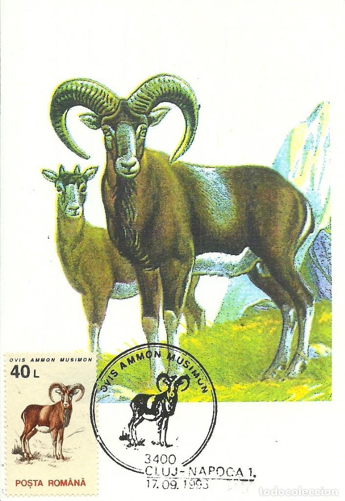 Sellos: 10 Tarjetas maximas de Rumania con diferentes animales .fauna- - Foto 6 - 219765872