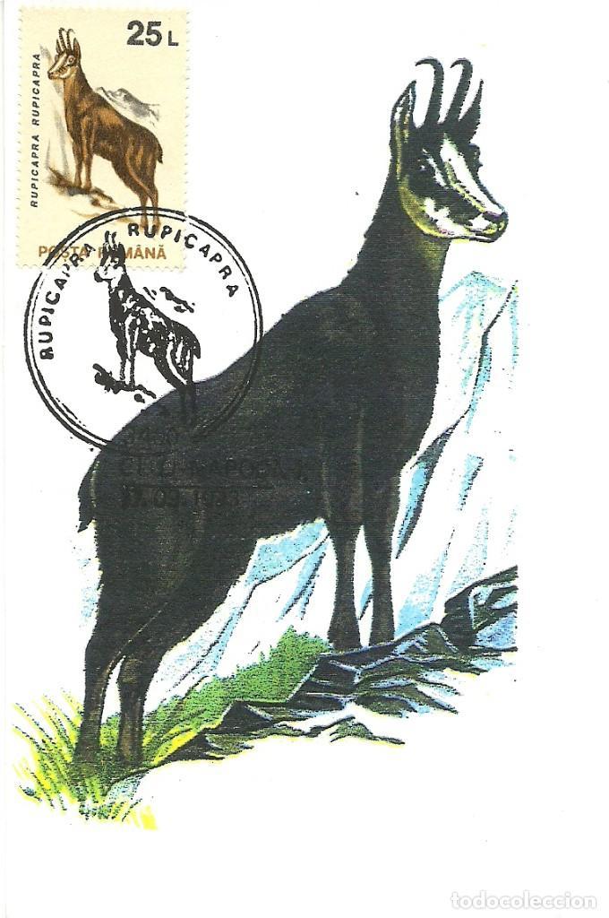 Sellos: 10 Tarjetas maximas de Rumania con diferentes animales .fauna- - Foto 7 - 219765872