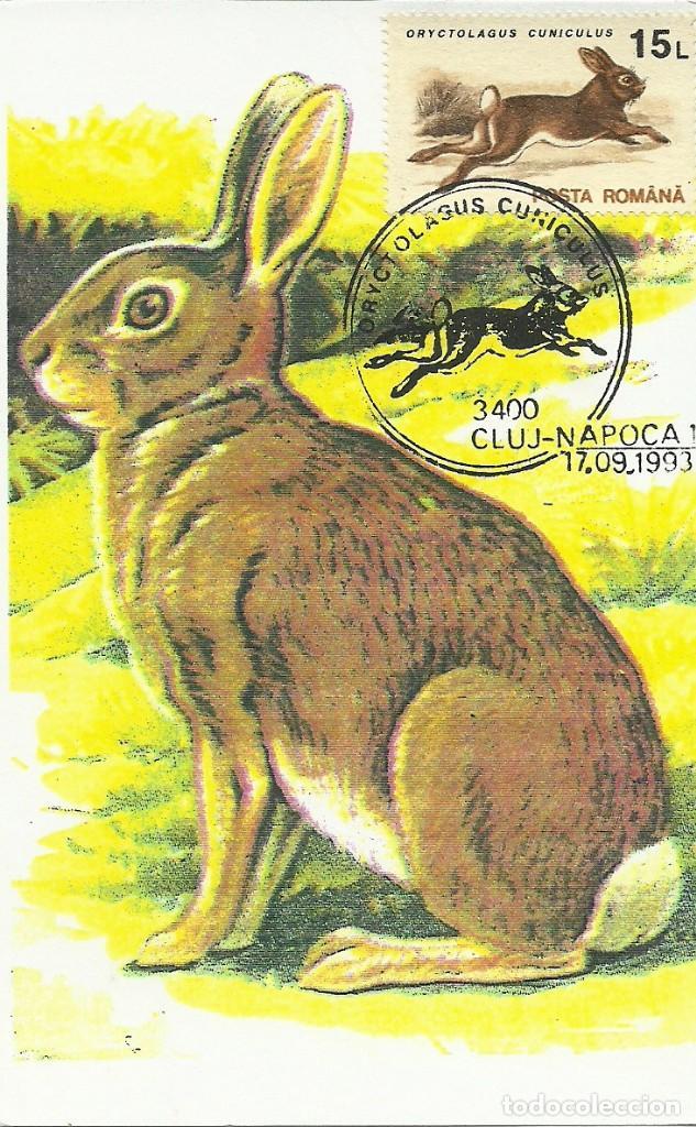 Sellos: 10 Tarjetas maximas de Rumania con diferentes animales .fauna- - Foto 9 - 219765872