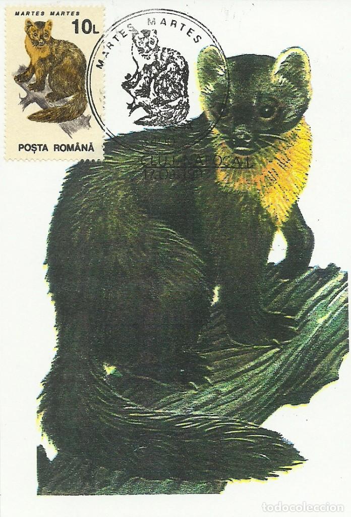 Sellos: 10 Tarjetas maximas de Rumania con diferentes animales .fauna- - Foto 10 - 219765872