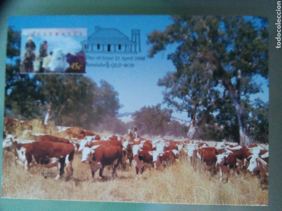 Sellos: Australia 1998 5 tarjetas máximas agricultura ganadería - Foto 6 - 73788422