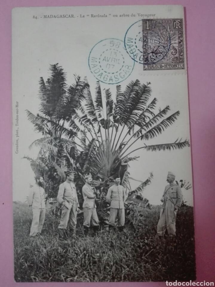 POSTAL MADAGASCAR 1907 LE RAVINALA A O ARBOL DEL VIAJERO (TARJETA MÁXIMA) (Sellos - Extranjero - Tarjetas Máximas)