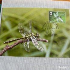 Sellos: TARJETA MÁXIMA DE BIELORRUSIA LIBELULAS 2010. Lote 219981022